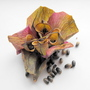 Hellebore Seeds 