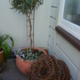 Early_june_09_025