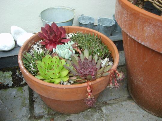 Mum's pot.