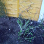 back_garden_spring_blue_berry_2008_001.jpg