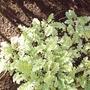 back_garden_spring_coneflower_2008_046.jpg