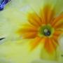 polyanthus_spring_2008_054.jpg