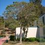 Presidio Park, San Diego, CA - Spathodea campanulata - African Tulip Tree (Spathodea campanulata - African Tulip Tree)
