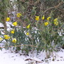 Easter_dafs