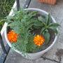 New_plants_006