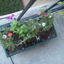 New_plants_008