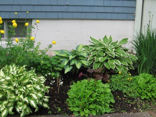 back shade garden