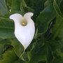 unknown flower in bloom