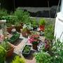 Garden_at_moment.jpg
