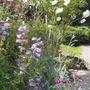 back garden June 2009
