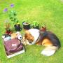 "My ""Head Gardener"", Conker the Sheltie, having fun opening a gift box."