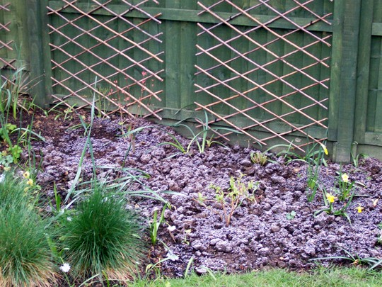 Changes to edge of the woodland bed