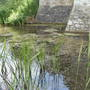 Moat._home_to_plenty_of_wildlife