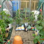 greenhouse traffic jam now cleared