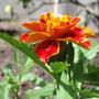 Garden_june_15_030