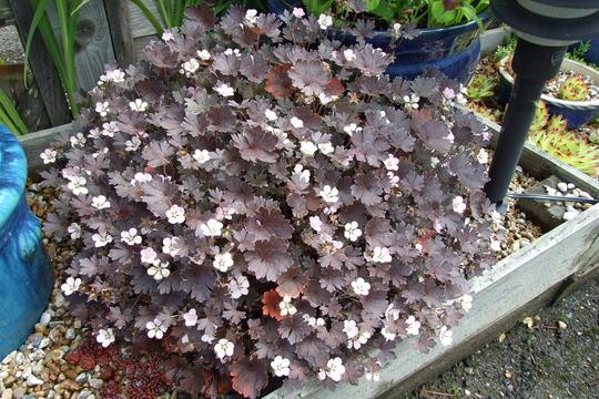 Unknown plant....