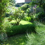 Shady spot (Buxus sempervirens)