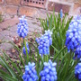spring_2008_hyacinth_1_016.jpg