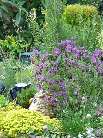 Small square garden
