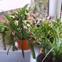 house_plant_1_014.jpg