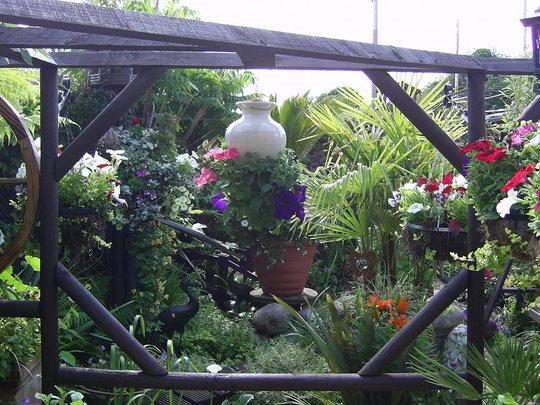 JEN'S GARDYN NGS OPEN GARDEN JUNE/JULY 2009 (Zantedeschia aethiopica (Arum lily))