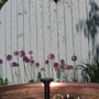 suspended drops