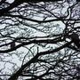 2_pidgeons_in_tree