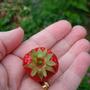 My first strawberry