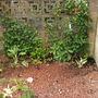 Update to wall cover - gravel garden June 2009