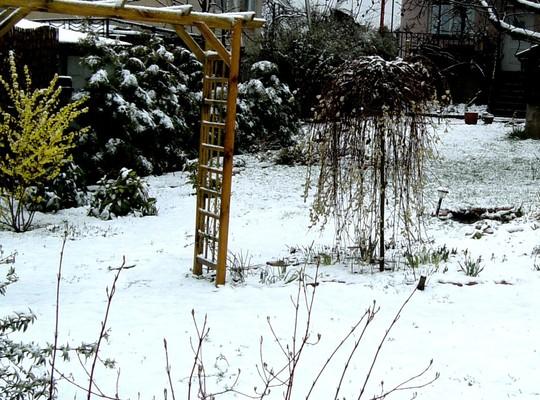 Snowy view in back garden