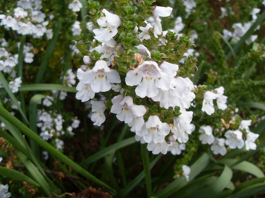 Sensory  Garden Glendalough