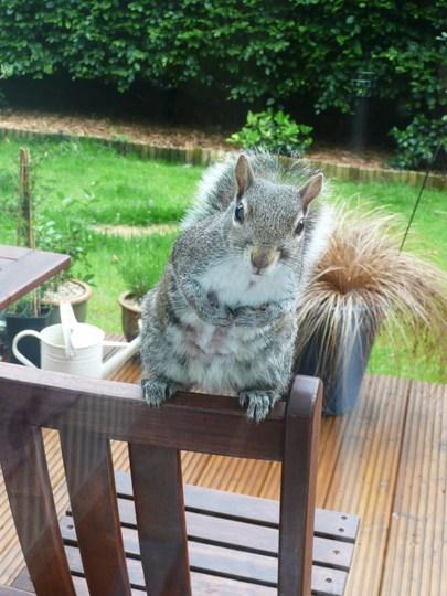 Nosy Squirrel No7