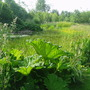 Top Edge Of Pond