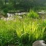 Wildlife Pond .....  Looking Very Wild!