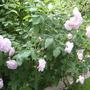 Garden_may_june_07_016