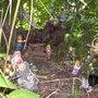 elf garden (brugmansia)