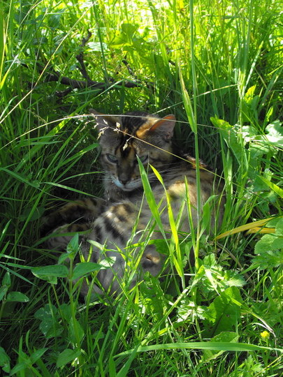 The Answer To Whos Playing Hide & Seek In the Long Grass is .....