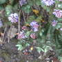 Caravan_flowers_and_night_out_june_09_074