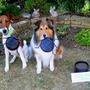 P1020030_edit._june._14._dogs_bugs.
