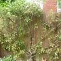 OUR POORLY-LOOKING APPLE TREE