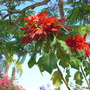 Balboa_park_06_17_09_062