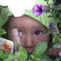 Lily_garden_004
