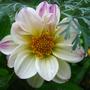 Flowers_june_032