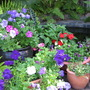 Courtyard_potted_flowers_14