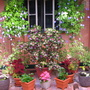 Winter in northern Oz:  Courtyard colour