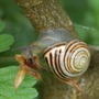 Snail having breakfast.