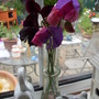 Sweetpea's from the garden