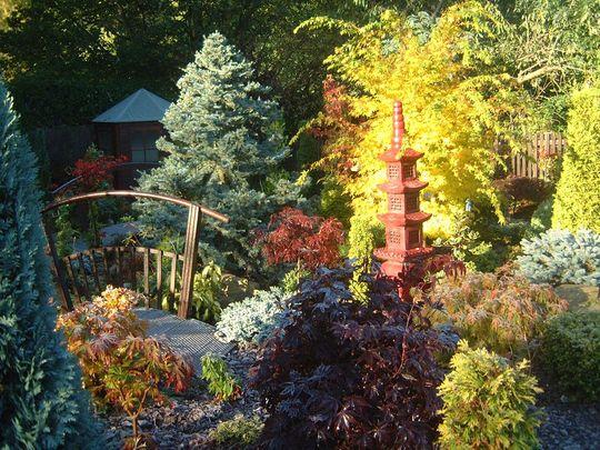 Acer Senkaki in Autumn - lower garden