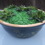 """Emerald City"" alpine planter"