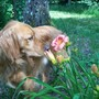 Bertie Likes Day Lilies
